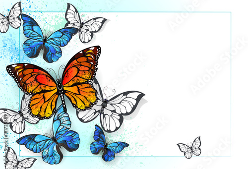 Foto op Canvas Vlinders in Grunge Background with monarchs and morpho