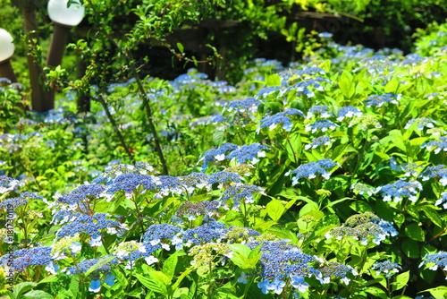 Tuinposter Lime groen 湖畔の花の風景9