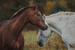 Love and tenderness of horses in the herd - 181760535