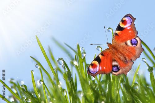 Fotobehang Vlinder morgens im Sommer