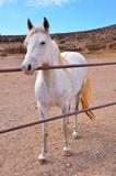 white horse - 181781976