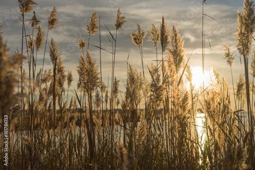 Foto op Canvas Ochtendgloren Sunrise on the water with tall plants