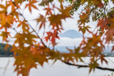 Mt.Fuji in autumn season in japan with blur maple tree leaves and cloudy background at Lake Kawaguchiko japan - 181795744