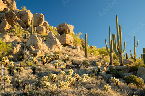 Deurstickers Arizona Sonoran Desert Landscape - Arizona