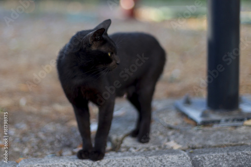 canvas print picture a stray black cat with yellow eyes