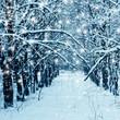 Winter landscape, december
