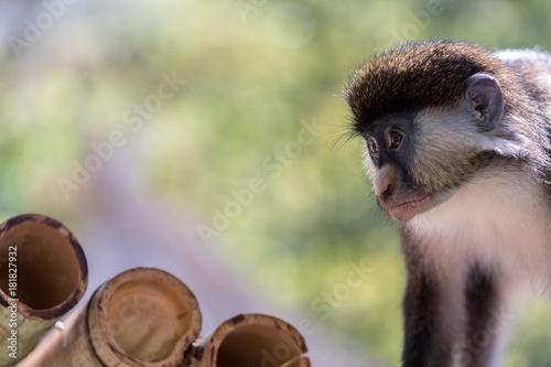 Sticker Ape