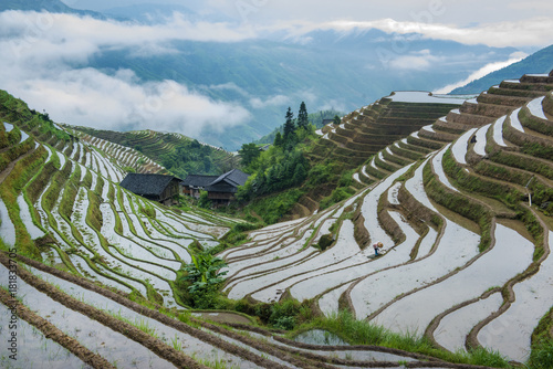 Deurstickers Rijstvelden Hard work farmers in china work in the rice field terraces in China. Plant the rice seeds from sunrise to sunset