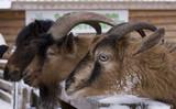 three animals - 181840918