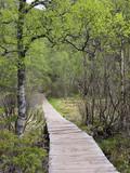 Boardwalk Trail to Pulpit Rock Near Tau, Norway - 181842926