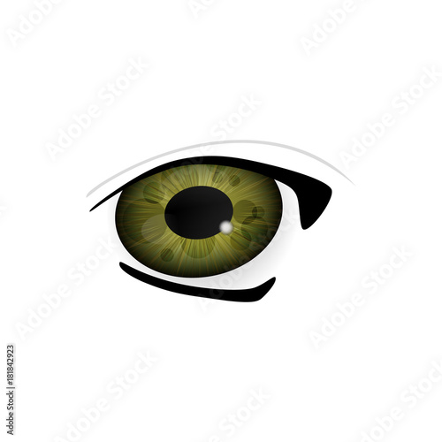 Eye. Human eyes closeup. Beautiful big eyes. Illustration - 181842923