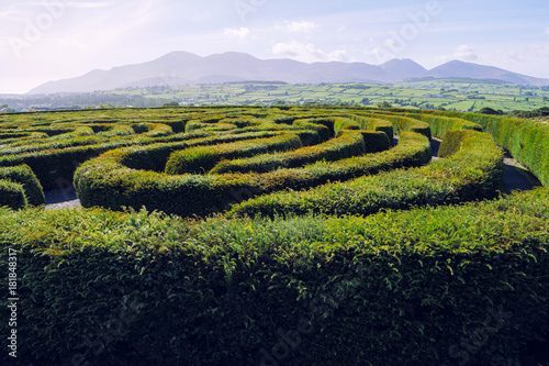 hedge maze against blue sky,Northern Ireland