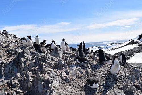 Tuinposter Wit antartica