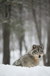 Fototapeta śnieg - Natura -