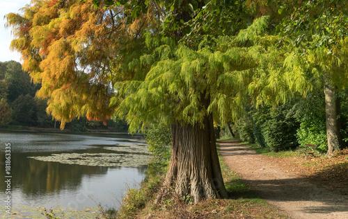 Fotobehang Weg in bos parc foret