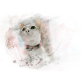 Cute white cat with old collar. Watercolor painting (retouch). - 181882150