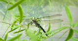 Close Up Macro Detailed Image of Dragonfly on Plant - 181891152