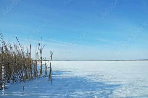 Fotobehang Blauw Winter landscape with frozen pond and dry reeds at the shore