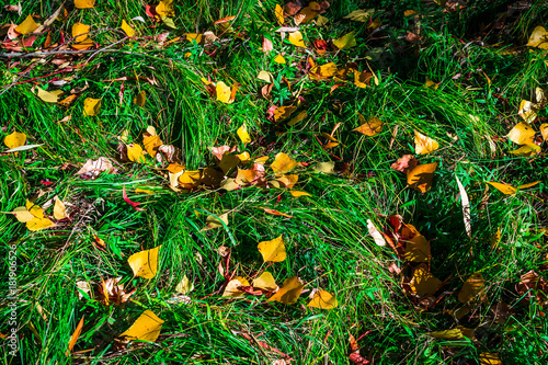 Foto op Canvas Groene autumn leaves hdr