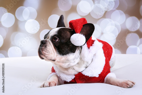 French bulldog posing in santa outfit for Christmas