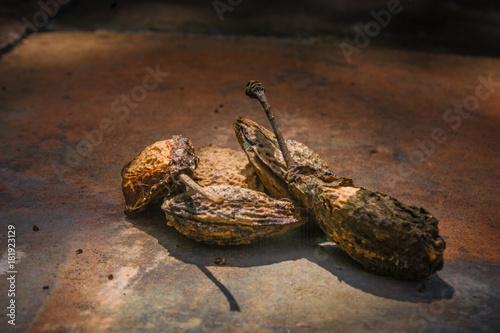 Fotobehang Kikker Vertrocknete Pflaumenkerne