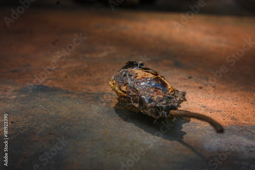Fotobehang Schildpad Vertrocknete Pflaumenkerne