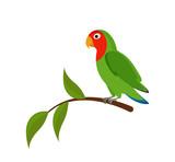 Green Lovebird on a branch