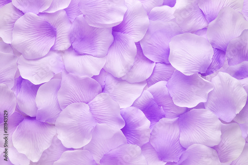 Close-up of purple petals of violet flowers
