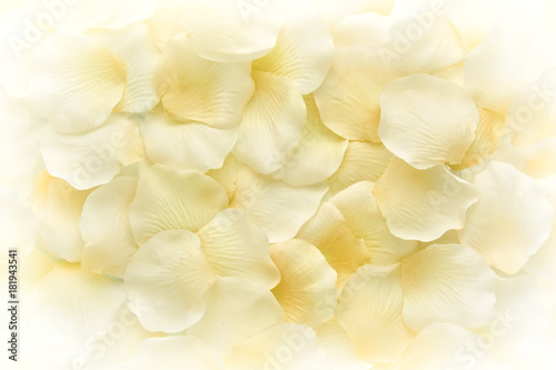 Background of pale yellow flower petals