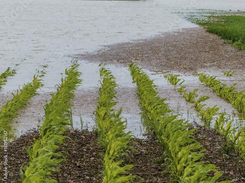 Foto op Canvas Rivier flood 2013