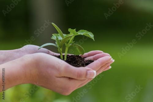 Foto op Aluminium Planten woman holds plant in hand