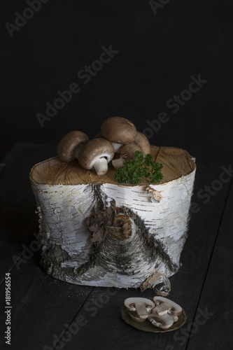 Champignons auf Birkenstamm