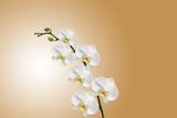 Orchidée sur fond