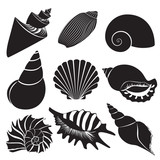 Vector sea shells. Seashell silhouettes set isolated.
