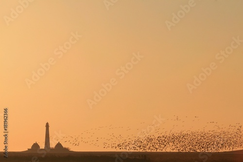 Keuken foto achterwand Noordzee Vogelschwarm am Westerhever Leuchtturm an der Nordsee