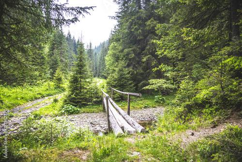 Fotobehang Zomer Wooden bridge in the forest