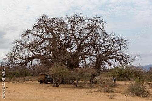 Foto op Aluminium Baobab Baobabbaum (Adansonia digitata) - Afrikanischer Affenbrotbaum - Tansania
