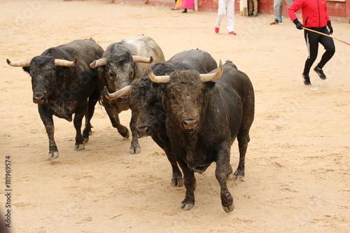 Aluminium Bison toro bravo bull