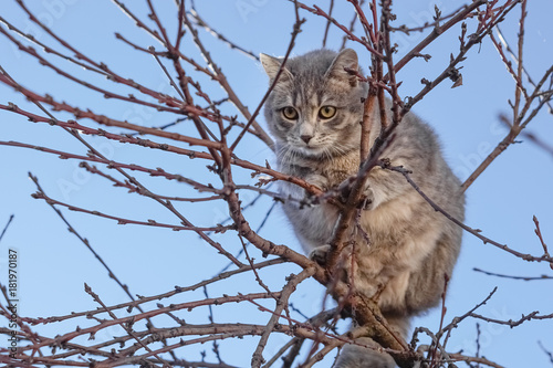 Gray cat on tree branches Poster