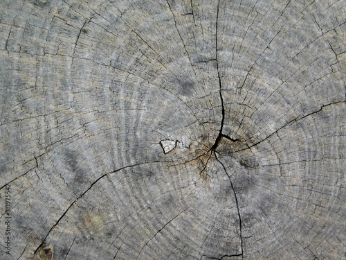 texture of tree trunk - 181975542