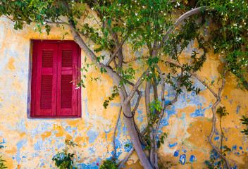 A Red traditional window next to a jasmin in Plaka. The most picturesque neighborhood in Athens