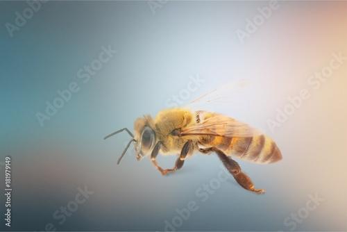 Aluminium Bee Bee.