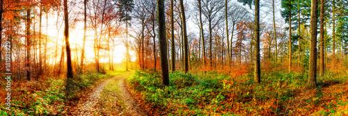 Fototapeta Road through a beautiful autumn forest at sunrise