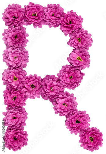 Foto Murales Letter R, alphabet from flowers of chrysanthemum, isolated on white background