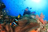 Scuba diver explores coral reef - 182003577
