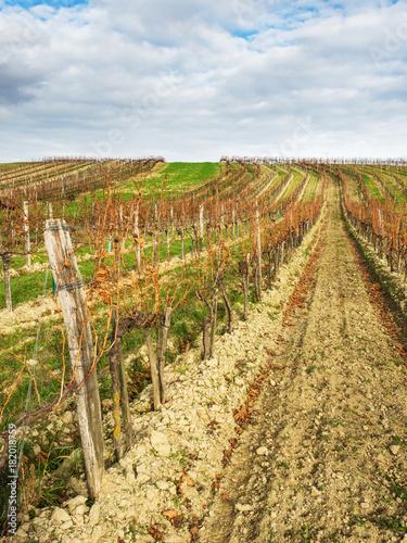 In de dag Wijngaard Weingarten im Herbst