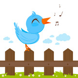 Blue bird singing on a wooden fence.
