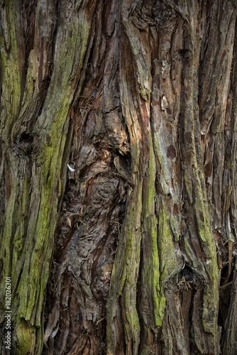 Papiers peints Bambou Détail d'arbre à Meillonnas, Ain, France