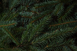 Fototapety Spruce branches. Can be use how background