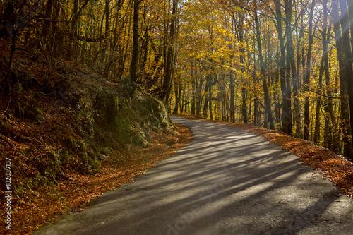 Foto op Canvas Herfst Autumn